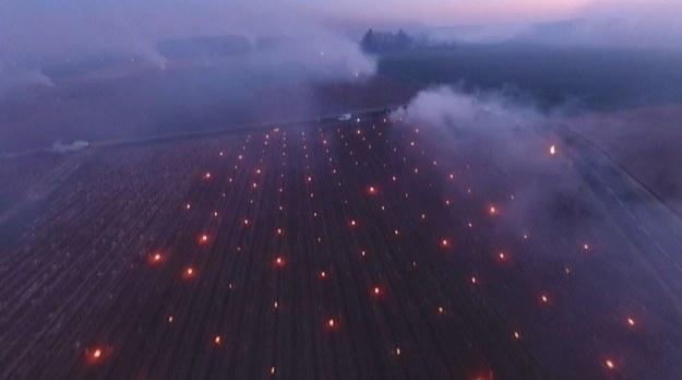 Francuscy winiarze walczą z nagłym atakiem zimy. Chcąc ochronić swoje uprawy przed mrozem, palą ogniska.