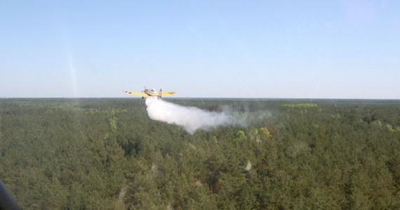 Pożar wybuchł w lasach w okolicach podwarszawskiej Zielonki. Do akcji gaśniczej ruszyło 5 zastępów strażaków, wysłano również dromadera, który z powietrza zrzucał wodę na płonący teren. Pożar jest już opanowany.