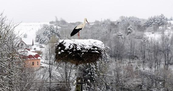 Mimo że mamy już połowę kwietnia – wiosenna pogoda nadal nie będzie nam towarzyszyła w najbliższym czasie. Przed nami kolejna chłodna noc z opadami śniegu, deszczu ze śniegiem i samego deszczu - poinformował PAP rzecznik i synoptyk IMGW-PIB Grzegorz Walijewski. Lokalnie mogą wystąpić oblodzenia dróg i chodników.