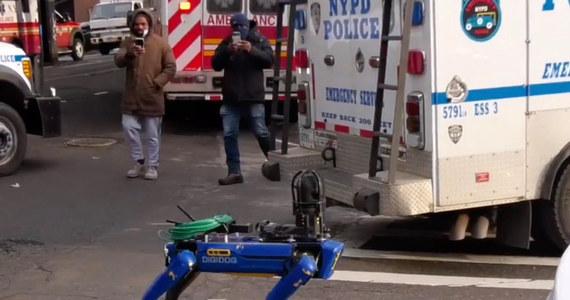 Nowojorski departament policji (NYPD) ma od niedawna na swym wyposażeniu psa-robota Digidoga. Wywołało to duże zainteresowanie w mediach, ale też wzbudziło kontrowersje i krytyczne głosy polityków.