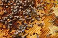 Światowy Dzień Ziemi: Wielkie tajemnice małych pszczół