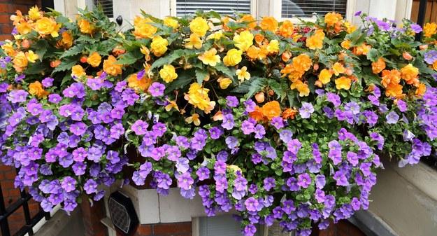 Zbliża się sezon wiosenno-letni, pora więc zadbać o balkon. W tym roku możliwość wyjazdów prawdopodobnie nadal będzie ograniczona, dlatego warto stworzyć sobie relaksującą przestrzeń we własnym domu. Jak upiększyć balkon, by wyglądał jak z Instagrama?