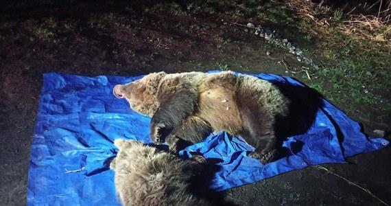 Słowaccy przyrodnicy zastrzelili w nocy z niedzieli na poniedziałek dwa niedźwiedzie, które podchodziły pod popularny hotel górski w Dolinie Wielickiej pod Gerlachem w Tatrach.