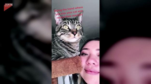 W sieci dużą popularnością cieszą filmiki, na których właściciele kotów dają swoim pupilom buziaka i czekają na reakcję. W przypadku tej dwójki była ona zdecydowanie intensywna!