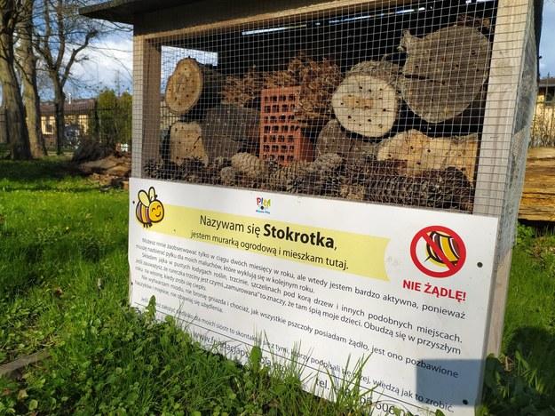 /foto: Fundacja Pszczoła /