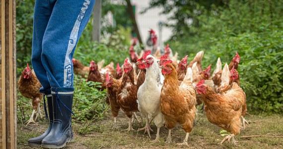 W Chinach potwierdzono pierwszy na świecie przypadek zakażenia człowieka wirusem ptasiej grypy H10N3. Mimo to  chińska państwowa komisja zdrowia oceniła, że ryzyko szerzenia się patogenu wśród ludzi na dużą skalę jest bardzo niskie.