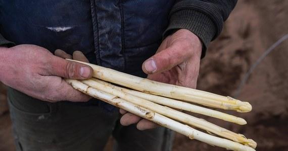 """Na południu Holandii policja odkryła i zlikwidowała obóz, w którym kilkudziesięciu Rumunów, pracujących przy zbiorze szparagów, mieszkało w """"przerażających i niebezpiecznych"""" warunkach. Według lokalnych władz niektórzy z nich mogli być nawet bici."""