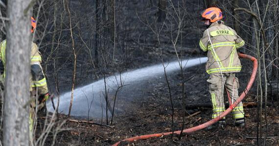 W większości województwa zachodniopomorskiego, północno-zachodnim krańcu Wielkopolski oraz zachodniej i północnej cześć lubuskiego, a także w zachodnich powiatach woj. podlaskiego występuje duże zagrożenie pożarowe - ostrzega IBL.