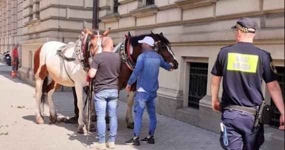 """Krakowska policja będzie wyjaśniać niebezpieczną sytuację, która wydarzyła się w centrum miasta - rozpędzone konie wraz z dorożką bez woźnicy biegły ulicą Szpitalną. Zwierzęta zostały zatrzymane przez strażników miejskich. """"Serce wielkiego miasta nie jest właściwym miejscem do wykorzystywania koni dorożkarskich w celach rozrywkowych"""" -  przekonuje Krakowskie Stowarzyszenie Obrony Zwierząt."""