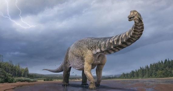 To największy kiedykolwiek znaleziony w Australii dinozaur – twierdzą naukowcy z Antypodów. Chodzi o gatunek odkryty w 2007 roku. Jak informuje bbc.com, tytanozaur mógł osiągać do 6,5 m wysokości i 30 m długości. Był więc tak długi jak boisko do koszykówki.