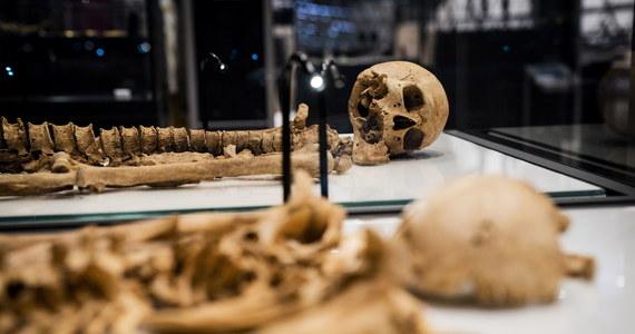 Szkielety dwóch wikingów, którzy zmarli po dwóch różnych stronach Morza Północnego, w tym miesiącu trafią na wystawę w Kopenhadze. Obaj zginęli śmiercią gwałtowną. Czy się spotkali za życia? Nie wiadomo, choć badania DNA potwierdziły, że byli ze sobą spokrewnieni.