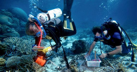 Wielka Rafa Koralowa może trafić na listę zagrożonego światowego dziedzictwa UNESCO. Powód? Degradacja ekosystemu i szkody wywołane poprzez postępujące zmiany klimatyczne.