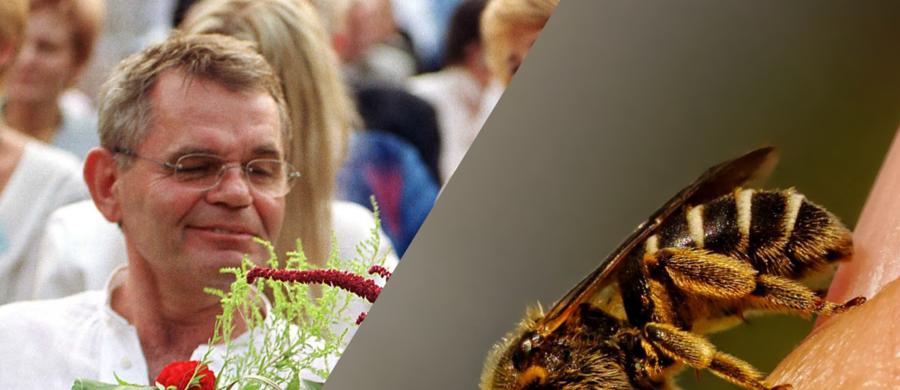 """Jerzy Janeczek, aktor znany z filmu """"Sami swoi"""" zmarł w wieku 77 lat. Jak poinformował """"Super Express"""", przyczyną śmierci było uczulenie na jad pszczół. Alergolodzy przestrzegają, że w wakacje wzrasta liczba przypadków wstrząsów anafilaktycznych wywołanych właśnie ukąszeniem owadów."""
