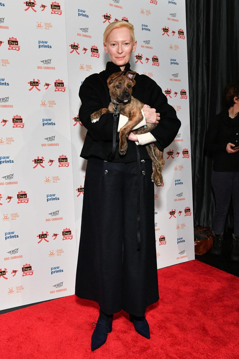 """To już dwadzieścia lat, odkąd podczas Festiwalu Filmowego w Cannes wręczane są nagrody dla najlepszego psiego aktora na dużym ekranie, czyli tzw. Palm Dog (dosłownie: Psia Palma - gra słów od nazwy głównej nagrody festiwalu, Złotej Palmy, czyli Palme d'Or). Tym razem stylową czerwoną obrożę otrzymały trzy psy rasy springer spaniel angielski należące do Tildy Swinton. Snowbear, Dora i Rosy wystąpiły u jej boku w filmie Joanny Hogg """"Pamiątka: Część 2""""."""