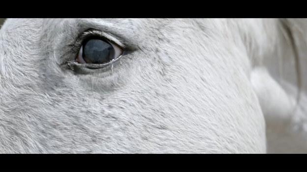 """Ipla przedstawia autorski, pierwszy serial przyrodniczo-dokumentalny, opowiadający o dobrostanie zwierząt hodowlanych w Polsce. Premiera """"Zwierzostanu"""" już 26 lipca."""