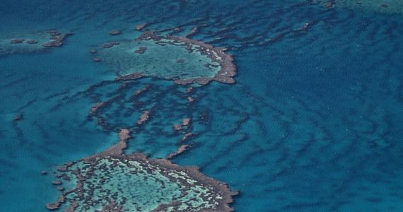 """Członkowie Komitetu Światowego Dziedzictwa UNESCO zdecydowali dziś, podczas spotkania w formie online, że Wielka Rafa Koralowa nie trafi na listę obiektów zagrożonych. Decyzja jest efektem """"intensywnego lobbingu"""" prowadzonego przez Australię - podała agencja Reutera."""