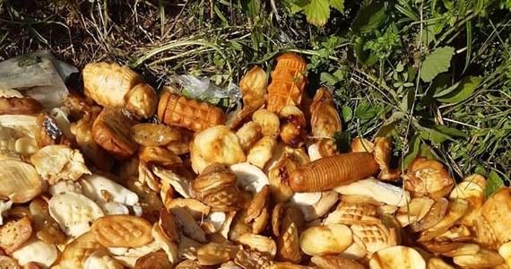 Leśnicy w Bieszczadach poszukują osoby lub osób, które wyrzuciła w lesie kilkanaście kilogramów serków przypominających oscypki. Nadleśnictwo Ustrzyki Dolne wskazuje, że sery mogą stanowić śmiertelne zagrożenie dla dzikich zwierząt.