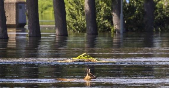 Północna część Holandii ucierpiała z powodu obfitych opadów. W miejscowościach De Westereen i Surhuisterveen w prowincji Fryzja na północy kraju ewakuowano domy opieki. W wielu innych miejscowościach zalane są drogi oraz domy.