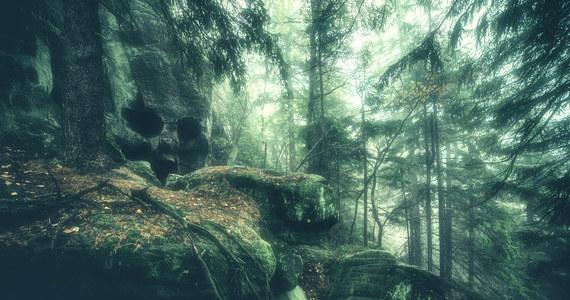 Park Narodowy Gór Stołowych na Dolnym Śląsku udostępnił turystom Skalną Czaszkę.  To skała, którą procesy geologiczne doprowadziły do tego, że wygląda jak ludzka czaszka. Do tej pory była niedostępna, bo jest na terenie ochrony ścisłej. Przyciągała jednak odwiedzających park, którzy aby ją zobaczyć łamali prawo... schodząc ze szlaku.