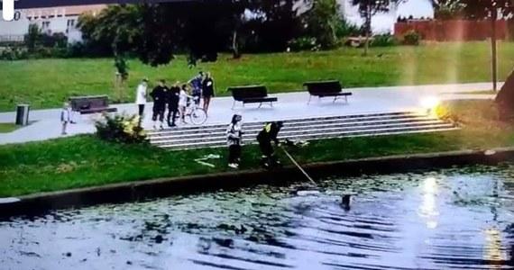 Mieszkanka Nowego Dworu Gdańskiego wrzuciła do rzeki Tuga reklamówkę z małymi kotami. Na pomoc ruszyła zwierzętom przypadkowa spacerowiczka, bez zastanowienia wskoczyła do rzeki. Niesamowitą akcję ratunkową zarejestrował monitoring miejski.