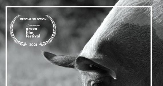 """W październiku wejdzie do kin, ale już w sierpniu film """"Gunda"""" będzie można zobaczyć przedpremierowo na proekologicznym BNP Paribas Green Film Festiwalu w Krakowie. Reżyserem jest Rosjanin Wiktor Kossakowski. A tytułowa Gunda to świnia opiekująca się młodymi. Producentem czarno-białego dokumentu o zwierzętach hodowlanych jest aktor, laureat Oscara Joaquin Phoenix. """"To jest nienachalna filmowa medytacja"""" - mówi Konstancja Sawicka z Gutek Film. Rozmawiała z nią Katarzyna Sobiechowska-Szuchta z redakcji kulturalnej RMF FM."""