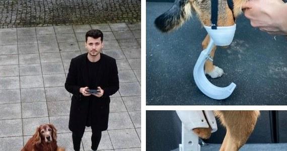 Maciej Szczepański - student ostatniego roku weterynarii na Uniwersytecie Przyrodniczym we Wrocławiu - przygotowuje protezy dla dwóch psich pacjentów. To 3-letnia Sonia, która została potrącona przez samochód i straciła część tylnej łapy oraz 8-letni Leto, któremu pociąg przejechał przednią łapę.