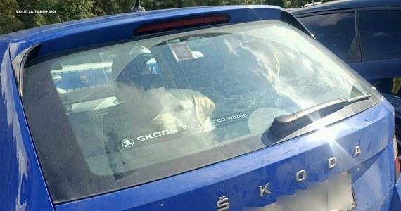 Na parkingu przed wejściem do Morskiego Oka kobieta zostawiła samochód, a w nim psa. Ratować zwierzę musieli policjanci. Za znęcanie się nad czworonogiem może jej grozić kara do 3 lat więzienia