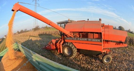 Niebezpieczna sytuacja w Bogusławicach w Wielkopolsce. Maszyna do młócenia kukurydzy wciągnęła ręce rolnika. 47-latek stracił wszystkie palce jednej dłoni.