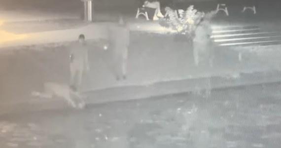 Mieszkańcy Nowego Dworu Gdańskiego błyskawicznie rzucili się na ratunek kotu, który wpadł do rzeki. Zwierzę udało się uratować. Całą akcję uchwyciły kamery monitoringu miejskiego.