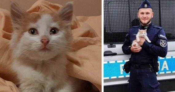 Policjanci z Komendy Miejskiej Policji w Białej Podlaskiej znaleźli w Koroszczynie (pow. bialski) przemoczonego małego kotka, który schował się w zaroślach przed lisami. Zwierzak trafił pod opiekę mundurowych.
