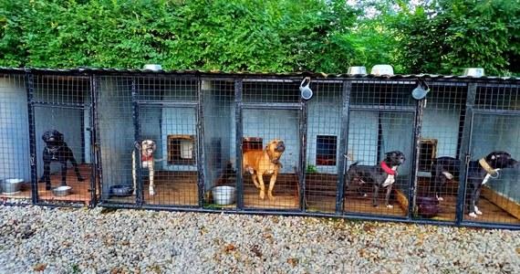 Nielegalne walki psów miał organizować mieszkaniec Opolszczyzny. Zatrzymany w tej sprawie 41-latek usłyszał zarzut znęcania się ze szczególnym okrucieństwem nad jednym z psów. Podejrzany jest tymczasowo aresztowany, a według opolskiej policji sprawa może mieć nawet europejski zasięg.