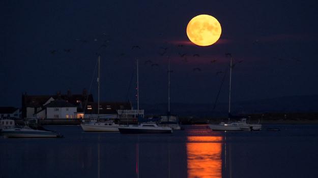 """Ostatni dzień lata to także ostatnia letnia pełnia księżyca. Joseph Anthony uchwycił ten moment na angielskim nabrzeżu. Olbrzymia, jasna tarcza naszego naturalnego satelity """"wisi"""" tuż nad ziemią, a w jej świetle mienią się przelatujące ptaki. Coś pięknego!"""