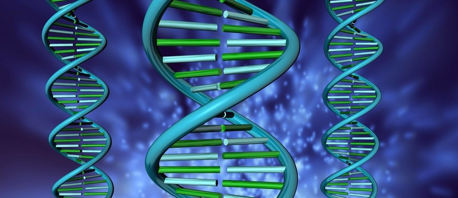 """Chiński potentat branży genowej bierze udział w finansowanym przez państwo programie badania genomu Polaków. Oferuje również w naszym kraju tanie testy prenatalne, które są przewożone i analizowane w laboratorium na Dalekim Wschodzie. Firma chwali się również, że współpracuje z laboratorium kryminalistycznym polskiej policji. Według amerykańskich służb, ten koncern może służyć chińskim władzom jako """"globalne narzędzie do gromadzenia genetycznych baz danych""""."""