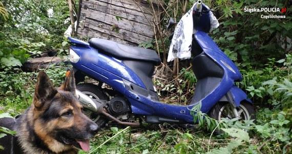Pies policyjny Kair, służący w Komendzie Miejskiej Policji w Częstochowie, kolejny raz wytropił skradziony pojazd. W zeszłym miesiącu odnalazł 3 motocykle, teraz – skuter.