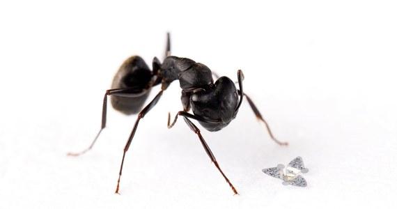 """Wyposażony w trzy maleńkie skrzydełka mikrochip wielkości ziarenka piasku to najmniejsza zdolna do unoszenia się w powietrzu konstrukcja, jaką stworzył człowiek - podaje magazyn """"Nature""""."""