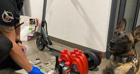Policyjny pies znalazł dopalacze w jednym z mieszkań w Kaliszu. Były ukryte w pralce - w bębnie i w pojemniku na proszek.
