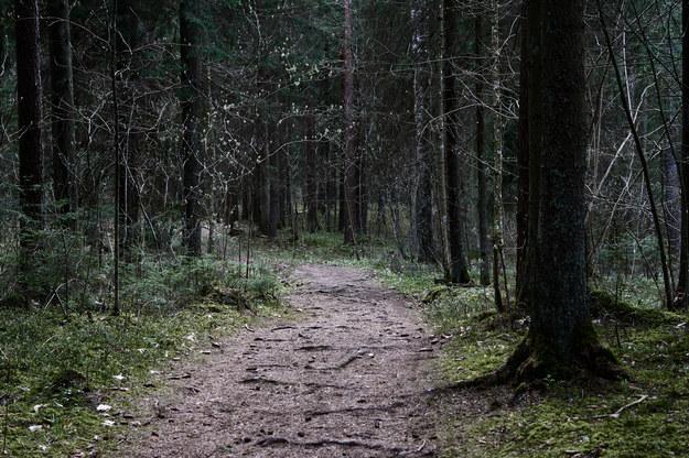 Dziewczynkę znaleziono po dwóch dniach w lesie. Szczęśliwy finał poszukiwań 8-letniej Julii