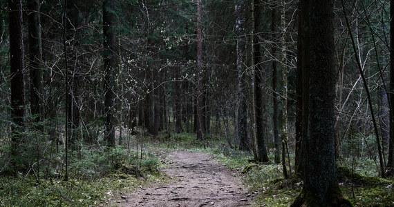 8-letnia Julia z Niemiec została odnaleziona po dwóch dniach poszukiwań – poinformowała czeska policja. Dziewczynka zaginęła w górach, przy granicy z Niemcami w lesie, gdzie wybrała się na wycieczkę z rodziną. W akcji poszukiwawczej brały udział setki osób.