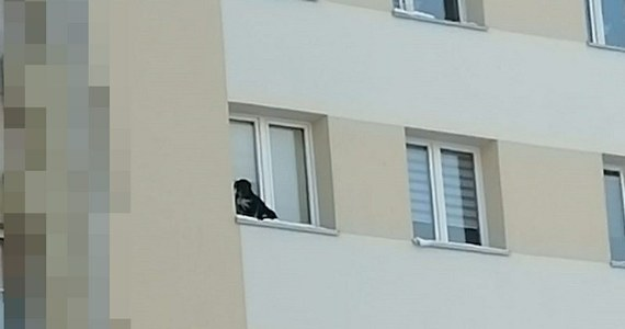 Sąd skazał 32-latka z Lubina w woj. dolnośląskim na pięć miesięcy więzienia za znęcanie się nad psem – informuje portal lubin.pl. Mężczyzna wystawił zwierzę na parapet na 9. piętrze bloku i zamknął okno. Przerażony czworonóg spędził na zimnie co najmniej 40 minut.