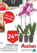 Gazetka promocyjna Auchan - Dzień nauczyciela  - ważna do 15-10-2018