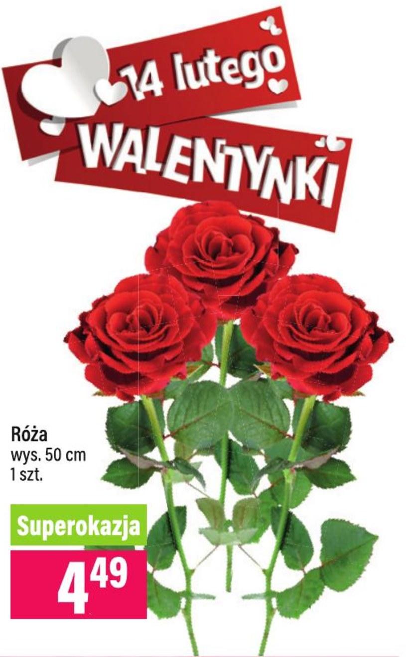 Gazetka promocyjna MILA - ważna od 13. 02. 2019 do 19. 02. 2019