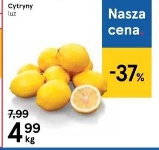 Cytryna niska cena