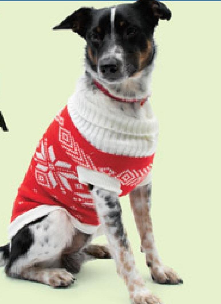 Ubranko dla psa Acti Pet niska cena