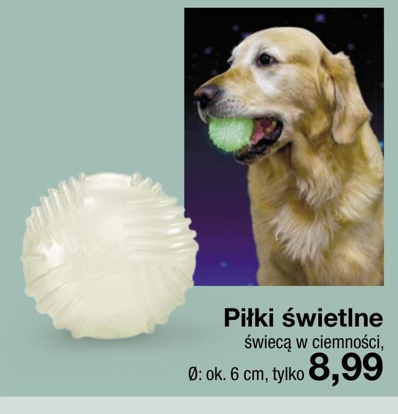 Piłka dla psa  niska cena