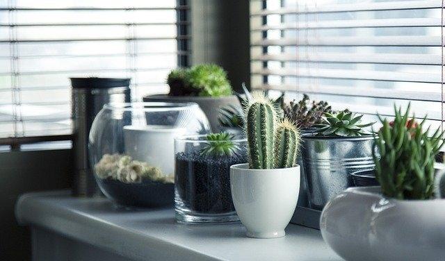 Promocje Doniczki i rośliny