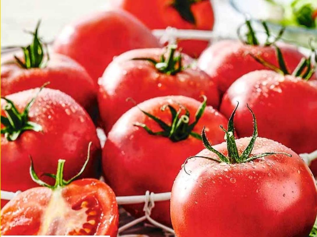 Pomidor niska cena