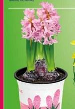 Kwiat Gardenline