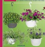 Roślina balkonowa Gardenline