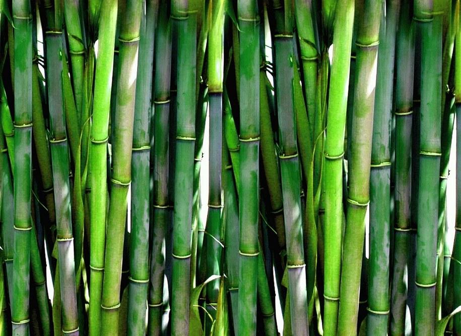 Naczynia jednorazowe ekologiczne z proszkowanym bambusem szkodzą.