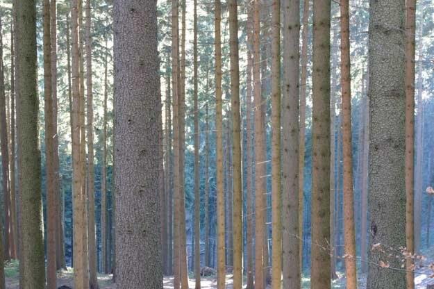 1,6s, f/16 ISO 200 /INTERIA.PL - Adam Nietresta